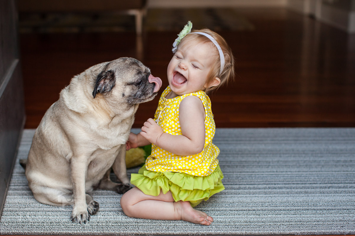 Baby being licked by puppy pug for Excellent Holiday Card Photos